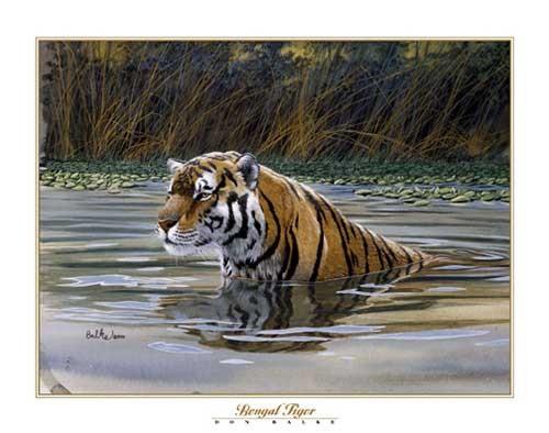Bengal Tiger by Don Balke