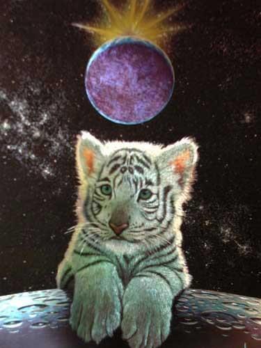 Kleiner weißer Tiger Bild