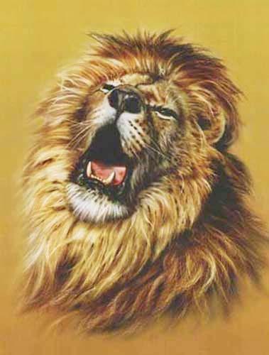Löwe, Lion`s Roar by David Penfound