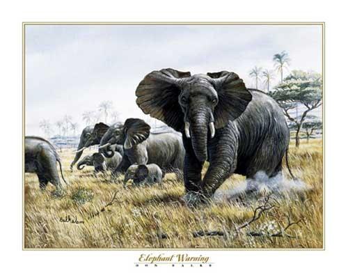 Elefanten, Elephant Warning, Don Balke