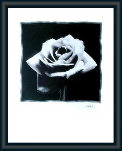 Bild schwarze Rose