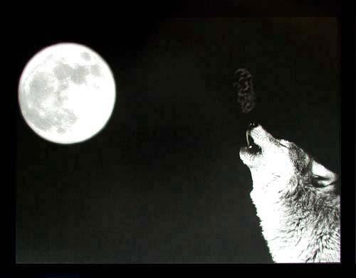 Poster schwarz-weiß: Wolf und Vollmond