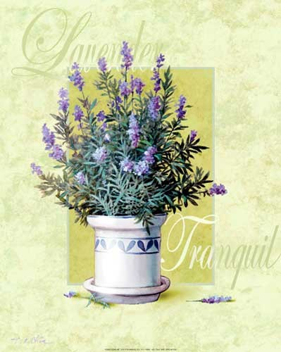 Lavender Tranquil