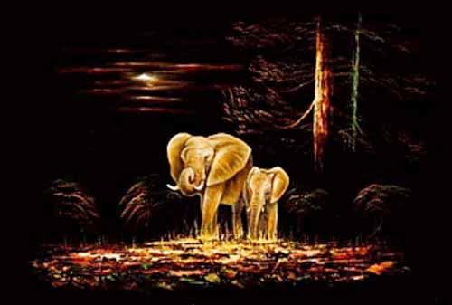 Elefanten in der Nacht