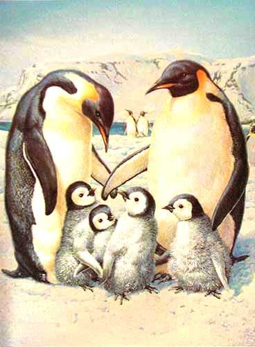 Penguin Family by Mike Jackson