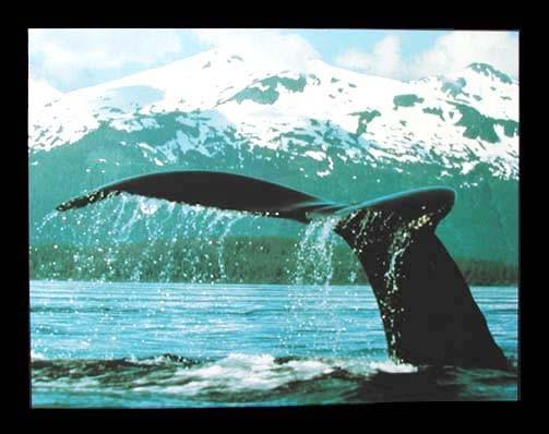 Walfloße