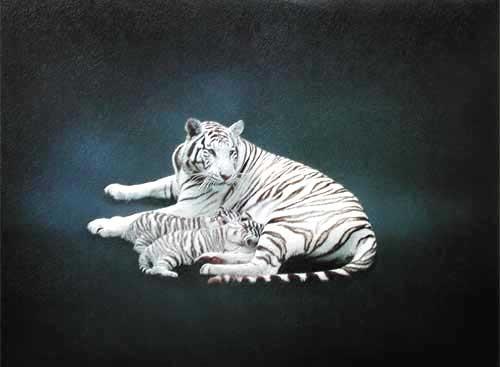 Weißer Tiger und Tigerbabys Kunstdruck