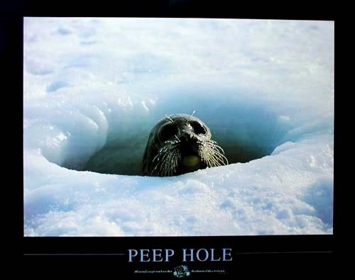Peep Hole by S. Butler