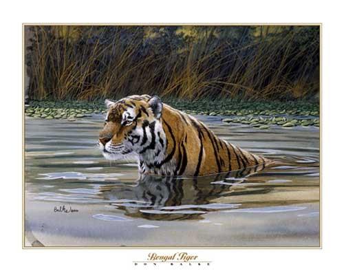 Bengal Tiger, Don Balke