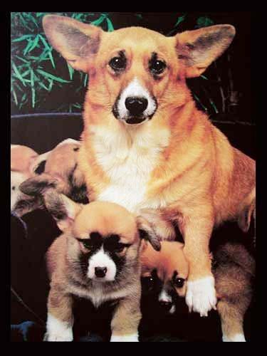 Hund und Welpen