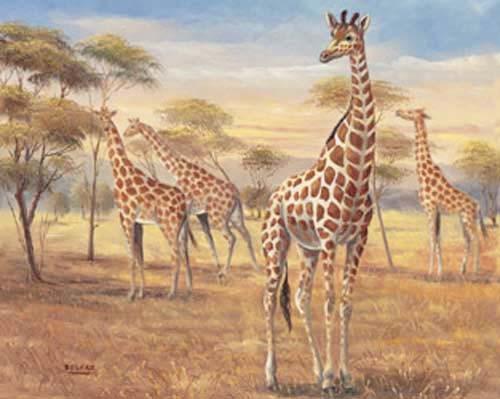 Giraffen-Herde in der Savanne, Kunstdruck