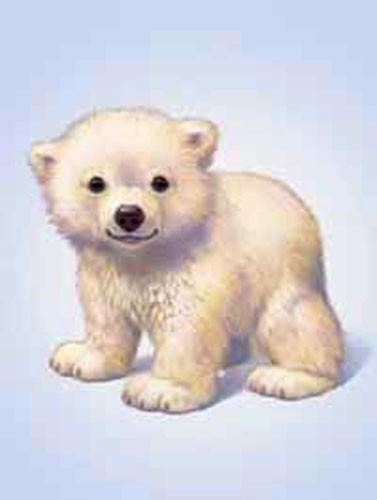 Kleiner Eisbär Bild