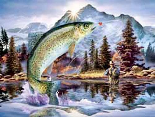 Angler, Rainbow Trout