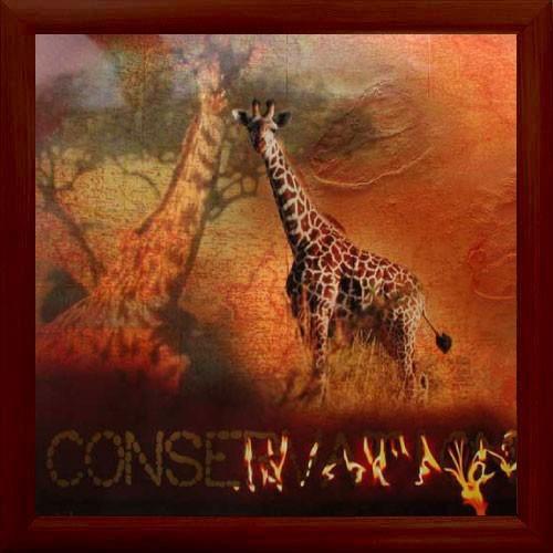 """Giraffen, """"Conservation"""""""