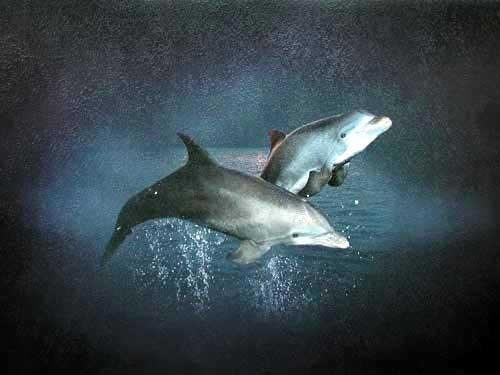 Zwei springende Delfine