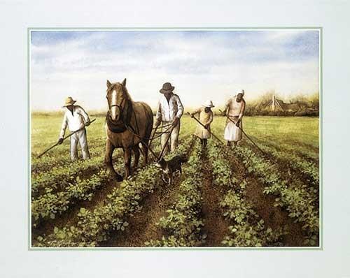 Tabacco Field
